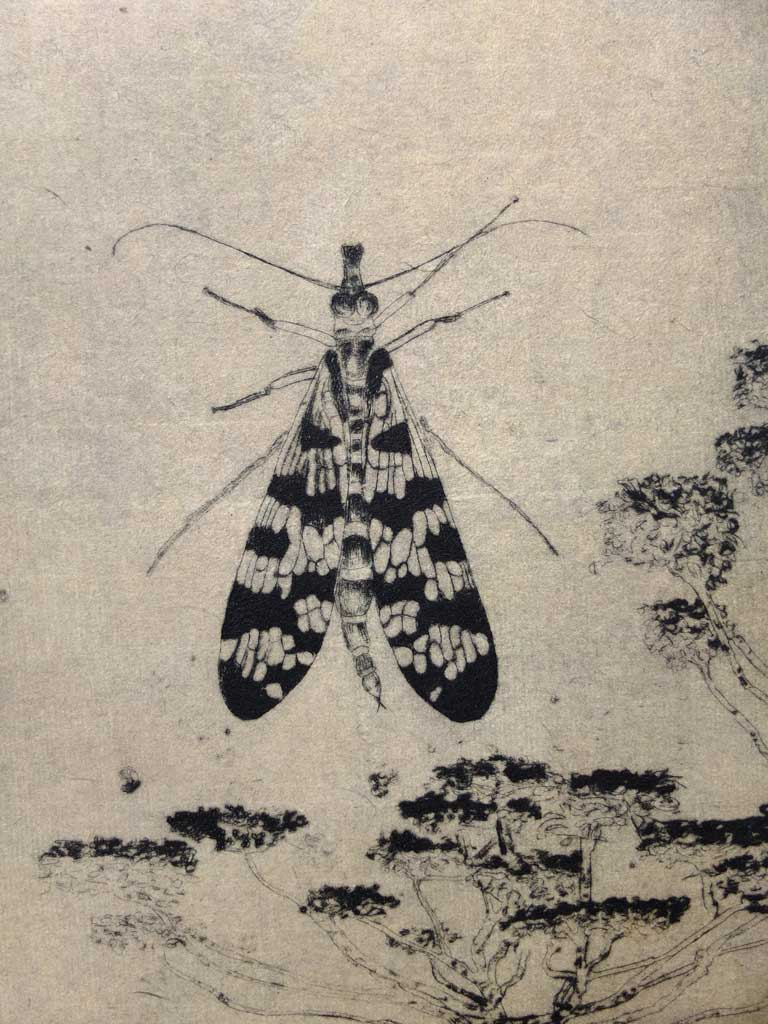 Papillon gravure chine asie christine cabirol